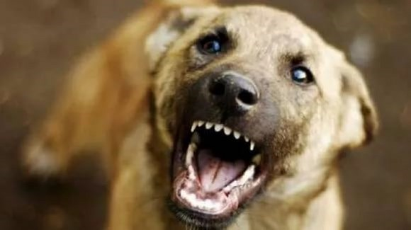 Что делать, если вас укусила собака