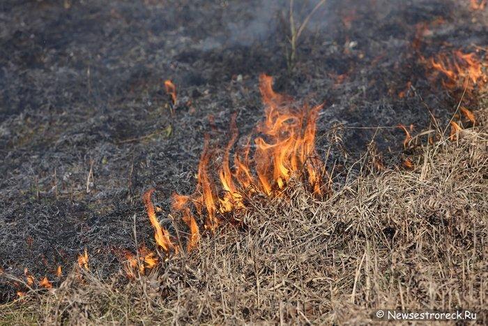 МЧС России предупреждает: пал травы может быть чрезвычайно опасным!